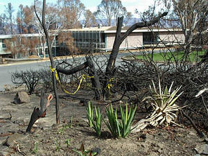 Flowerbeds recovering, one month after the fire