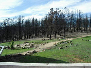 Unburnt lawn, just after the fire